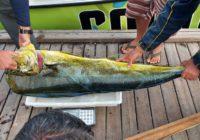 Campeonato de Pesca - Pescador Carlos Roberto